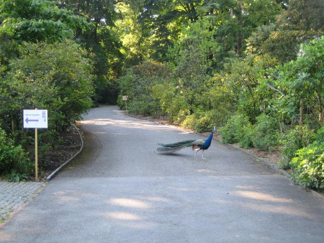 В ботаническом саду Женевы