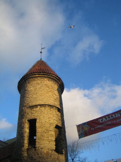 Чайки - неизменный спутник Таллина